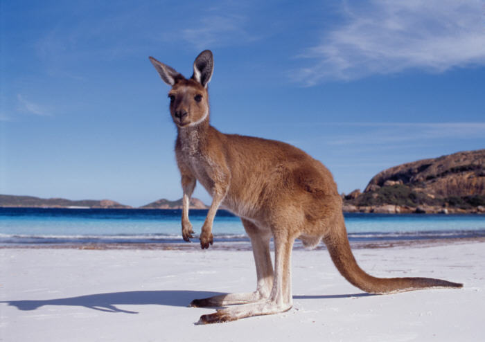 Why choose an Australian web hosting company?